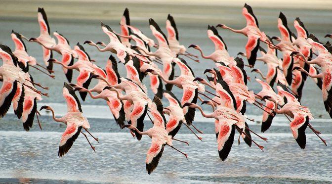 animal-migration-photos-a-36